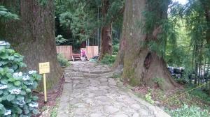 熊野道:夫婦杉